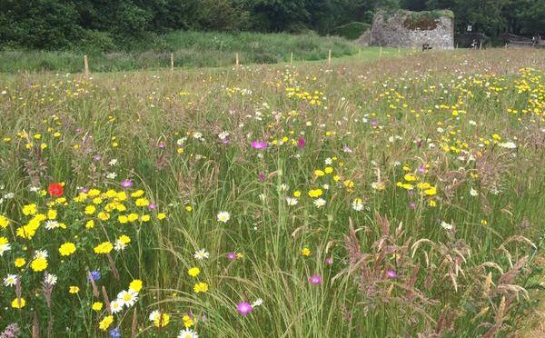 Motion to full Council – All Ireland Pollinator Plan